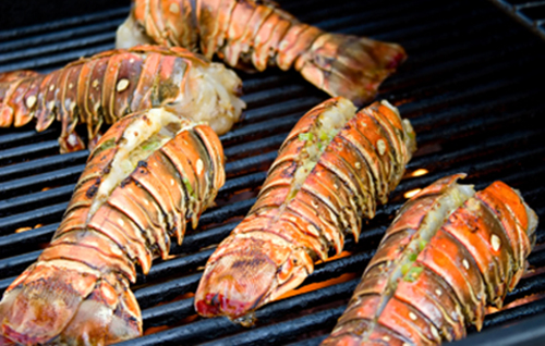 Belize-Lobsters-on-grill