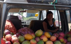 Belize-cayo-district-Local-fruit-stall