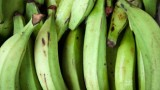 Belize-Garifuna-Cuisine-Plantain