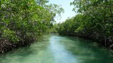Belize-wildlife-Mangroves