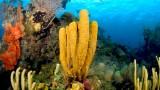 Belize-Southern-Cayes