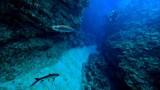 Belize-Central-Cayes-Adrenaline-Addict-Tailor-Made-Diving