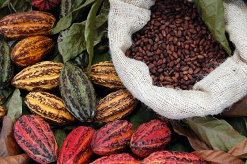 Belize-CacaoFest