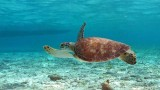 Belize-diving-snorkeling-turtle-watching