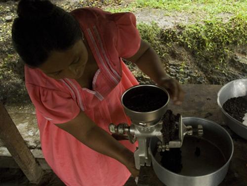 cotton-tree-resort-cacao