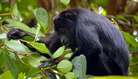 Green-Blue-Tailor-Made-belize-gorilla-wildlife