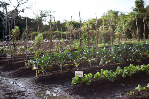 cayo-district-kaana-resort-vegetable-patch