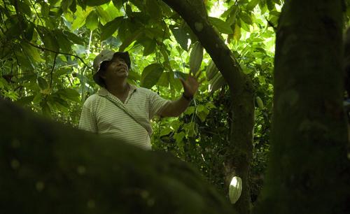 Southern-belize-Cotton-Tree-Lodge-resort-jungle
