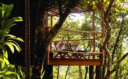 cayo-district-gaia-river-lodge-jungle