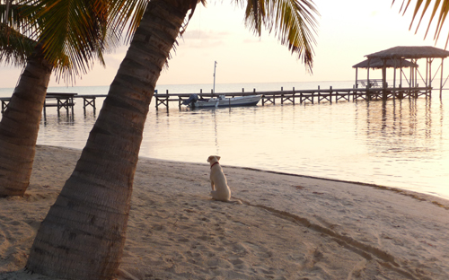 Cayes-Resort-Sundiver-Beach