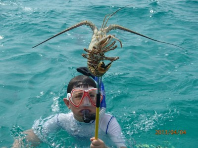 Spearing lobster