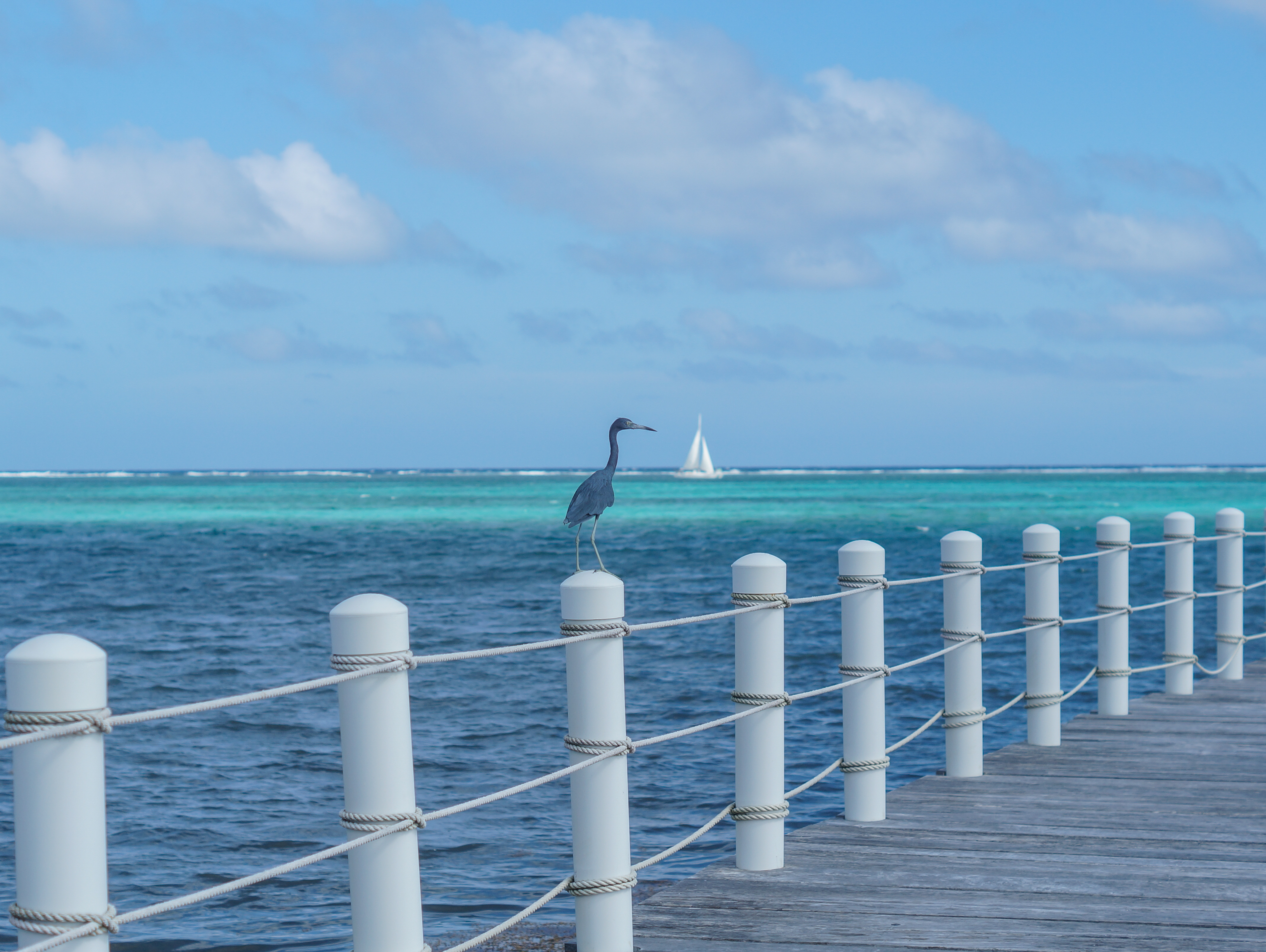 Belize_Zoelvh