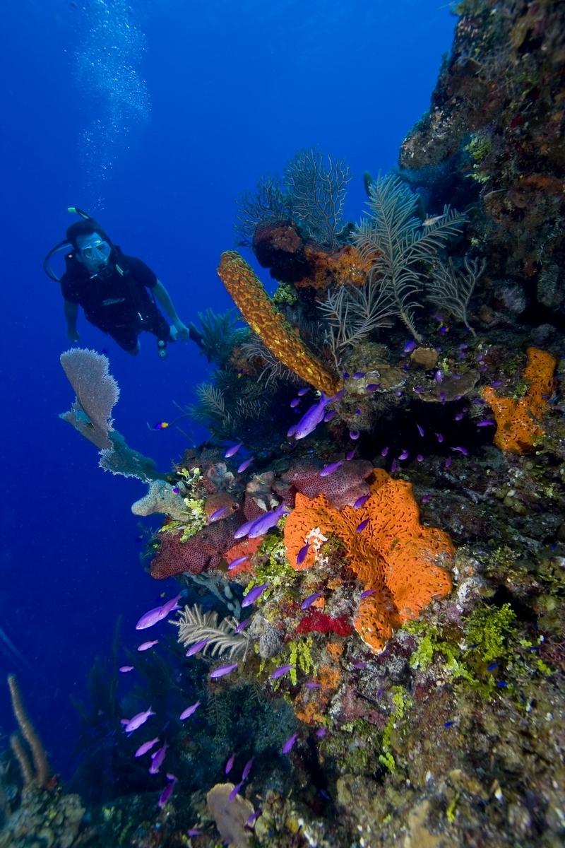 SCUBA Diver on Belize Barrier Reef